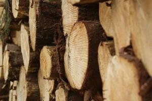 Pour la culture de champignon