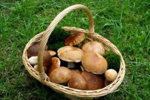 Cueillette des champignons le calendrier selon les - Calendrier des champignons comestibles ...