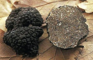 La truffe de bourgogne
