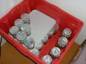fabriquer un incubateur pour champignons