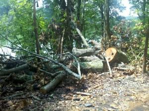 habitat et biotope des morilles