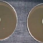sauver une souche de mycélium