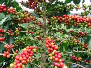 recyclage des déchets du café