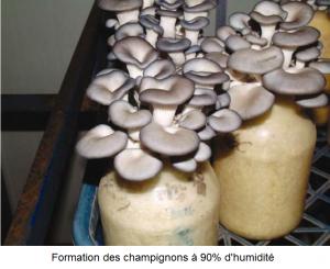 Formation des champignons sous une forte humidité