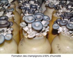 Formation des champignons sous une faible humidité