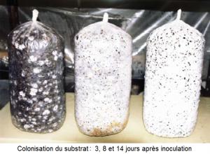 Incubation substrat à base de coques de graines de tournesol