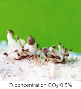 concentration dioxyde de carbone ou CO2