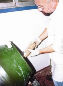 inoculation des coques de tournesol