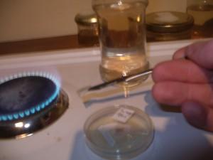 inoculation d'une culture liquide