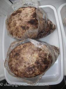 Substrat de Shiitake brun prêt à fructifier