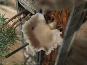 Art et culture des champignons